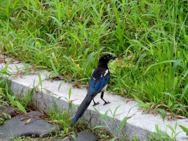 珍しい鳥 横