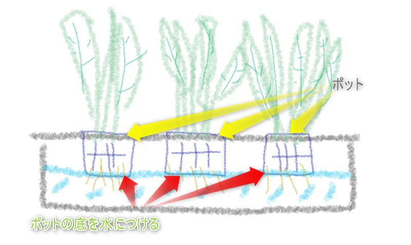 現在の水耕栽培